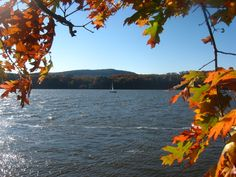 """Framed by Nature"" --- A lonely sailboat passes by, perhaps enjoying the fall foliage along the Hudson River.        --   Taken from Norrie State Park, Dutchess County, NY.        --   Oct. 19, 2008."