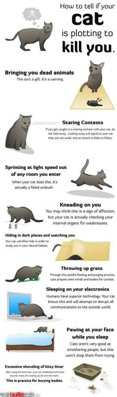 fyi all cats are planning to kill you you see they are secretly agents sent to earth by aliens to plot our demise!