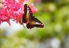 Free Public Domain CC0 Image: Butterfly On Flower Picture. Image: 101151890