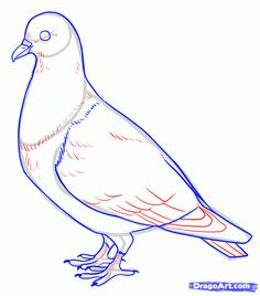 how to draw pigeons step 10