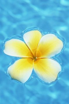 Floating Yellow Plumeria
