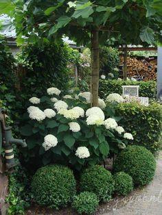 ✿ Beautiful white Hydrangeas ✿