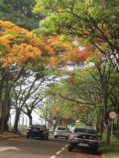 UEL Londrina e seus flamboyants | Blog da Mari Calegari