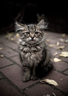 This kitten is so regal...