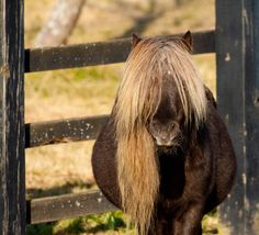 For Addison: Its a Dooley...just like Fritz of the Beautiful Horses book!