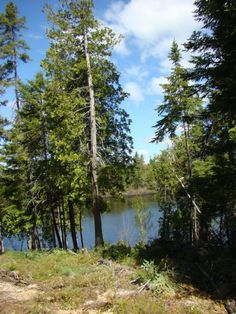 220-FOOT WATERFRONT PROPERTY FOR SALE Ideal spot for canoeing, fishing and waterfowl hunting! $15,900.00 Northrup Drive, Chipman Contact: Bob McLean 506-260-2030 or rmclean@nb.aibn.com