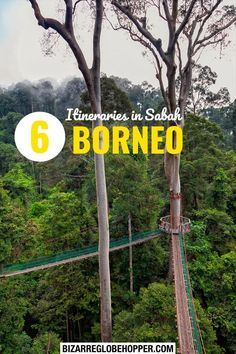 Fall in love with Sabah on or one week itinerary! Get inspired by six exciting Sabah itineraries – and start planning your trip to Sabah, Borneo. Read on to find the best beaches, rainforest adventures, and city getaways. Malaysia Itinerary, Malaysia Travel, Asia Travel, Borneo Travel, Borneo Rainforest, Dive Resort, Orangutans, Top Travel Destinations, Stay The Night