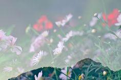 * Plant Leaves, Plants, Plant, Planets