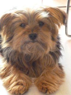 My dog Alba. Raffaella, Italy - 4/13/2015