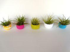 happy little air plants