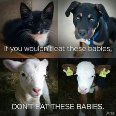 """Who gets to decide which lives matter and which do not? The only body that belongs to you is your own. Question what you've been taught about human domination over all other species and our assumed """"rights"""" over the bodies and lives of nonhuman individuals. Challenge your speciesism. Learn reverence for life. Live vegan. There's no good excuse not to. www.vegankit.com, freefromharm.org, & www.howtogovegan.org & http://bitesizevegan.com/vegan-library/"""
