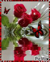 See the PicMix 3 red roses. belonging to StellaStai on PicMix. Good Morning Beautiful Pictures, Emoji Pictures, Red Roses, Creative, Plants, Butterfly, Sweetie Belle, Emoji Images, Flora