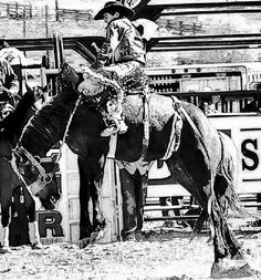 Working Cow Horse Cutting Western Quarter Paint Horse