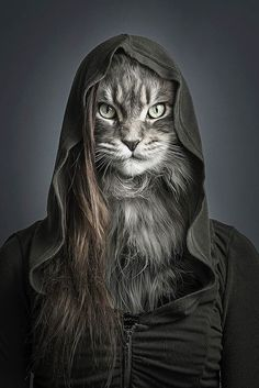 Discover The Russian Blue Cats - Cat's Nine Lives I Love Cats, Crazy Cats, Cool Cats, Costume Chat, Cat Dresses, Russian Blue, Cat People, Blue Cats, Animal Heads
