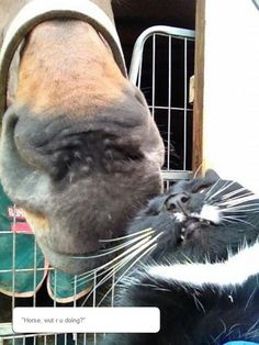 Horse Doesn't Respect Personal Space - Horses will bond strongly with other animals.  I suspect though, that this horse is just taking a long whiff of the kitty.  His nose is wrinkled upward.  And cat don't mind.  A horse's nose really is amazingly soft.