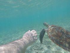 Schnorcheln und Tauchen auf Gili Trawangan - koffergepackt Gili Trawangan, Turtle, Snorkeling, Diving, Turtles, Tortoise