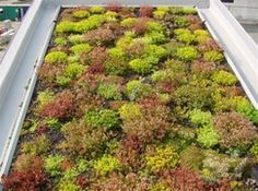 Een manier om zuinig met energie om te gaan is het aanleggen van een levende, groene laag op je dak. Andere termen die je vaak tegenkomt voor een groen dak zijn sedumdak of ecodak. Een groen dak isoleert geweldig en in de zomer blijft je huis stukken koeler. Zulke levende daken hebben nog meer voordelen, …