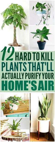 These 12 air purifying plants are THE BEST! I'm so glad I found these GREAT tips! Now I have some great ideas for low maintenance air purifying plants for my home! Definitely pinning! #besthouseplants #houseplantsairpurifying