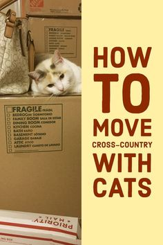 Traveling with cats in car? Moving cross country with cats can be stressful for both you and your cats. Here are some tips for making the trip bearable. Cat Care Tips, Pet Care, Pet Tips, First Time Cat Owner, Low Maintenance Pets, Mama Cat, Kitten Care, Cat Carrier, Moving Tips