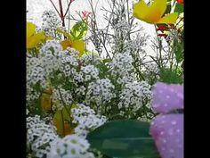 God loves you. God Loves You, Gods Love, March, Make It Yourself, Garden, Plants, Garten, Love Of God, Lawn And Garden
