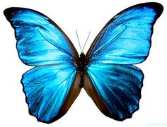 blue butterfly we dont have enough time as we know life is so short