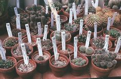 So many cacti.