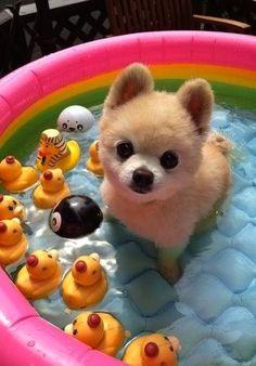 taking a dip.