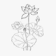 手绘素描荷叶荷花 Japanese Art, Silk Painting, Mural Painting, Art Drawings, Drawings, Kerala Mural Painting, Watercolor Flowers, Flower Drawing, Art