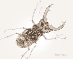 Unusual X-Ray Photography by Nick Veasey | 10Steps.SG