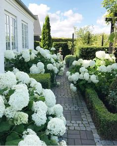 Garden & Landscaping - Ideas to design the garden or the garden beds . - Garden & Garden Planning – Ideas to design the garden or garden beds gardening # - Back Gardens, Outdoor Gardens, Rosen Beet, Garden Types, White Gardens, Front Yard Landscaping, Hydrangea Landscaping, Landscaping Ideas, Dream Garden