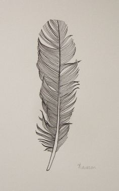 feather line drawings - Google Search