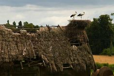 Storks, The Locals, Pop Up, Netherlands, Creatures, Cabin, World, House Styles, Amazing