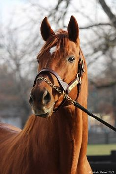 Point Given. His time in the breeding shed is over. Now Point Given is living in retirement at the Kentucky Horse Park!