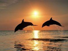 Dolphins, Boka Kotorska, Montenegro
