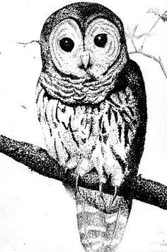 pointillism/stippling on Pinterest | Stippling, Georges Seurat and High School Art