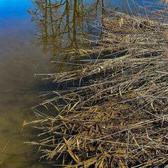 Die #kleinen #Fluchten sie sind #reizvoll und #attraktiv #dicht im #Erleben und #intensiv in der #Aktivität. Diesmal ging es zur #Kartause #Ittingen nahe #Frauenfeld zwei #Nächte drei #Tage so das #Format. Das #Wasser als #lebensspendendes #Element ist #allgegenwärtig bei der #Rundwanderung um die #Hüttener #Seen. Dass sie auch ein #reizvoller #Spiegel sein können das hat uns der #windstille #Sonnentag #geschenkt. Seen, Abstract, Artwork, Photography, Food, Mirrors, Water, Summary, Work Of Art