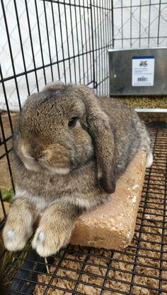 Adorable Pet Rabbit <3 <-- Adorable, but not as adorable as my two bunnies