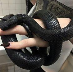 Les Reptiles, Cute Reptiles, Reptiles And Amphibians, Pretty Snakes, Beautiful Snakes, Draco Malfoy Aesthetic, Slytherin Aesthetic, Serpent Animal, Terrarium Reptile