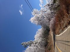 Ice on the trees