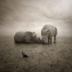 Lost In Desert by Leszek Bujnowski