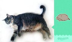 Homem recria stickers de gato do Facebook com seu gato real