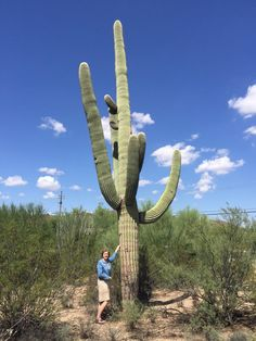 In Tucson standing next to a Saguaro Cactus. Shallow root structure & need a lot of hot air - might grow well in DC!