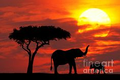 A Female African Elephant with her baby at sunrise at the Masai Mara Game Reserve in Kenya.