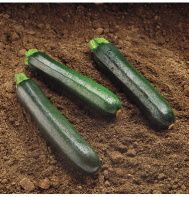 Zucchini squash---'Raven (F1)'    Very dark green for better health.    Darker green skin contains higher levels of lutein, a highly effective antioxidant. Open plants are high-yielding, producing glossy, smooth, cylindrical fruit. Concentrated fruit set, so plan for multiple plantings.       Days to Maturity or Bloom:   48