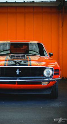 Hot Cars, I love Mustangs!!!!