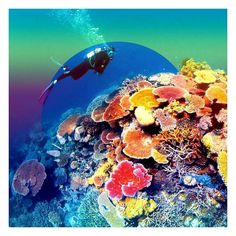 The Great Barrier Reef has over 900 islands stretching for over 2600 kilometers. It is greater in size than the United Kingdom Holland and Switzerland combined and can be seen from space.  #greatbarrierreef #coralsea #australia #coral #reef #coralreef #ocean #tropical #fish #oceanography #melbourne #travel #adventure #explore #wanderlust by wannabewander http://ift.tt/1UokkV2