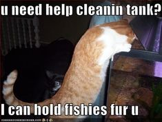 Funny Cat Pictures With Captions | You Can Has Job At I Can Has Cheezburger