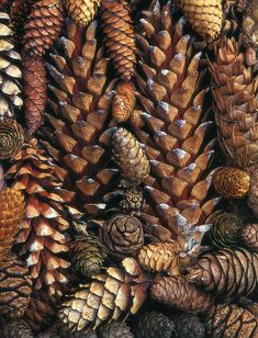 Gather pinecones in a bowl ... they bring textural depth and a woodsy quality to a room.