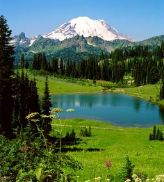 Mt. Ranier, Washington state- I lived there, hiked there, picked berries and chanterelles there. Miss it!!!