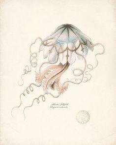 Atlantic Jellyfish #dailyconceptive #diarioconceptivo